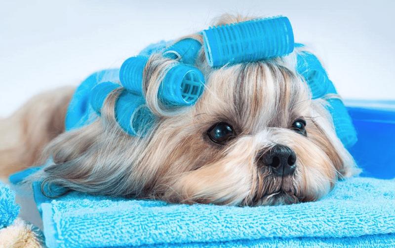 Lợi ích không ngờ từ dịch vụ Spa thú cưng - Mypet App - Ứng dụng cho thú  cưng